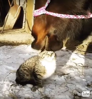 すごい顔のネコちゃん