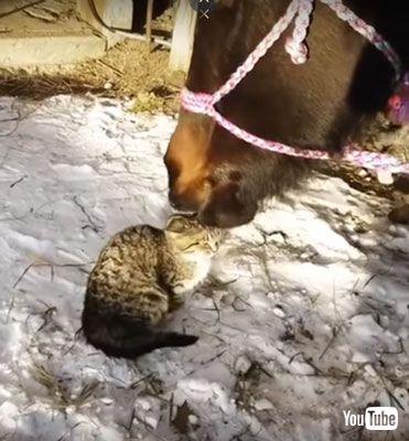 ネコちゃんをなでるウマ