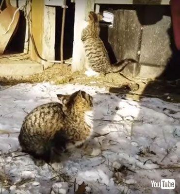 見上げるネコちゃん