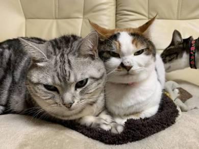 猫ベッドつぶれる