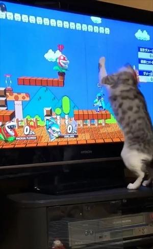 パックンフラワーで遊ぶ猫