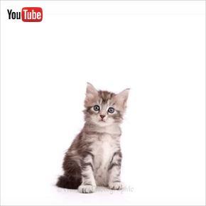 子猫のタイムラプス動画