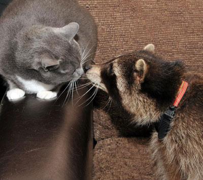 猫と仲良し