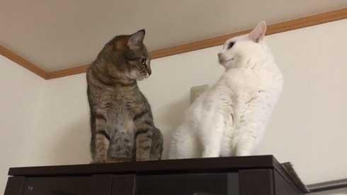 猫 パンチ 叱咤激励 ビックリ 驚き 瀬戸口みづき