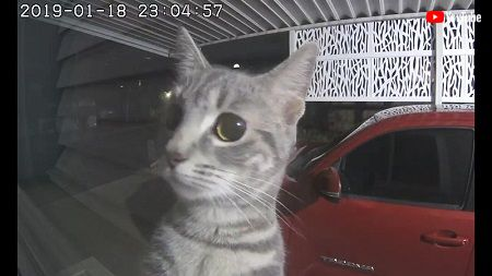 Cat Plays Peek A Boo with Security Camera