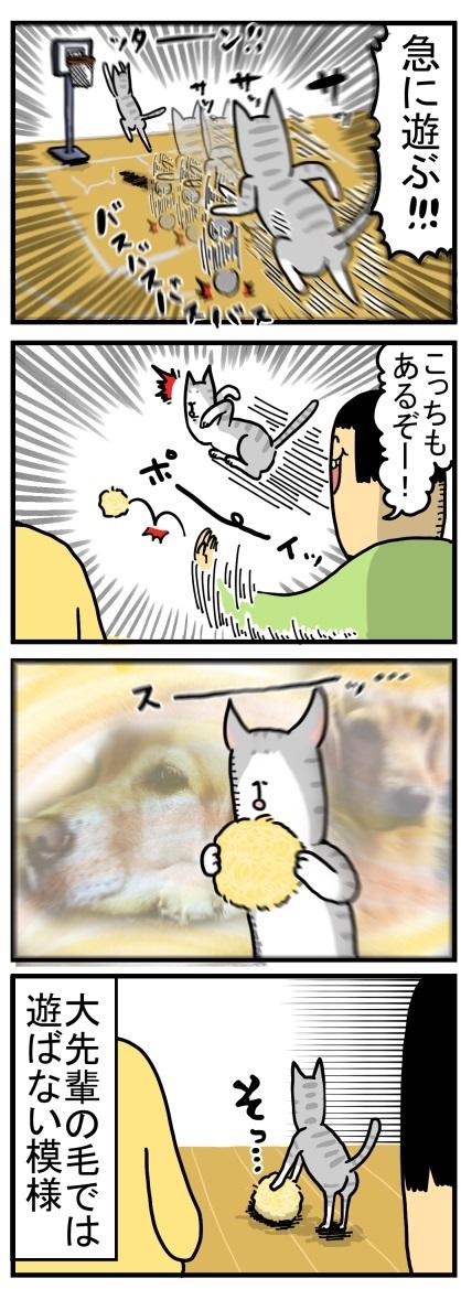 ゴールデンレトリバー 猫 交流