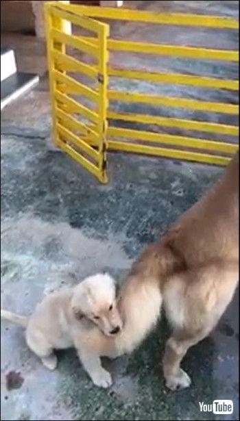 しっぽが当たりまくる子犬