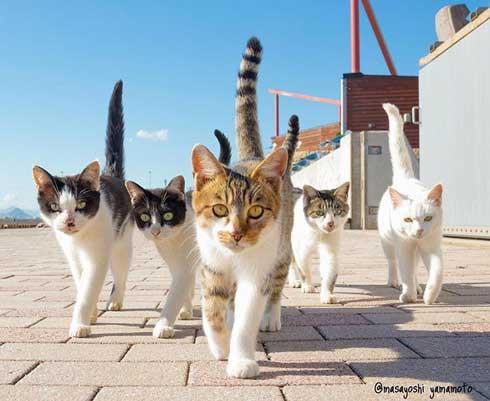 立ち猫 山本正義 写真集 猫 Instagram