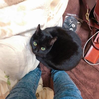えっ 行っちゃうの だめ 飼い主さんにしがみつく黒猫ちゃんの切ない表情がかわいい ねとらぼ