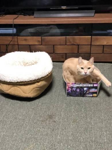 ガンプラの箱が好きなネコ