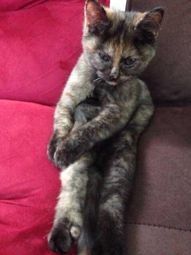 お風呂 のぞき 気まずい顔 猫 表情 目をそらす