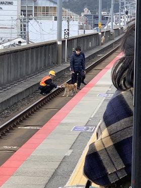 線路 犬 JR西日本