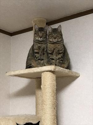見つめてくる猫ちゃんたち