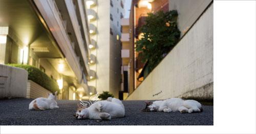 道路と猫集会