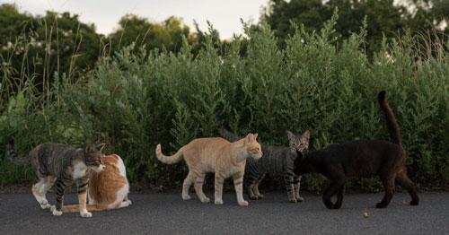草むら猫集会
