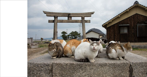 鳥居と猫集会