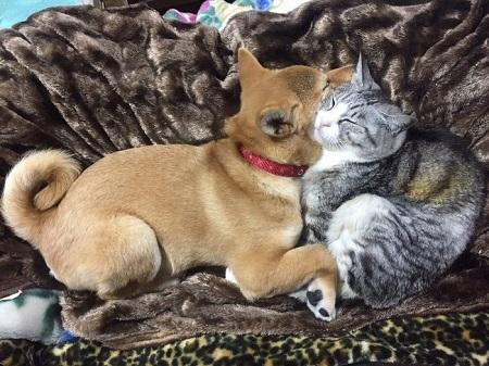 仲良し犬と猫 はるお