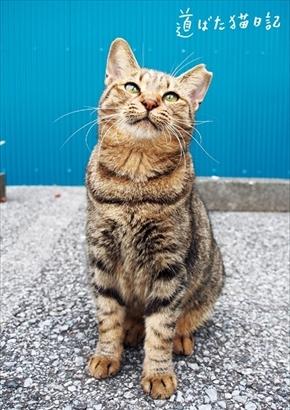 フェリシモ 地域猫応援グッズ