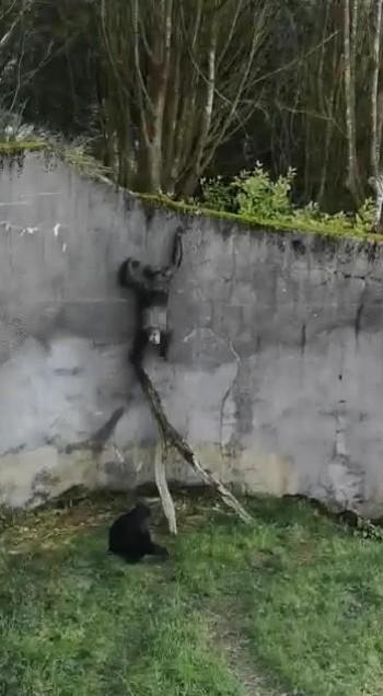 お猿大脱走
