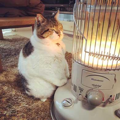 猫 ぶさお ストーブ 暖まる 温まる 暖を取る かわいい