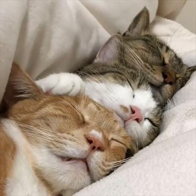 毛布の下にいる猫ちゃんたち