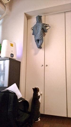 子どもを助けようとする猫