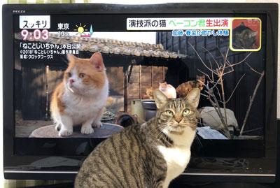 テレビの前