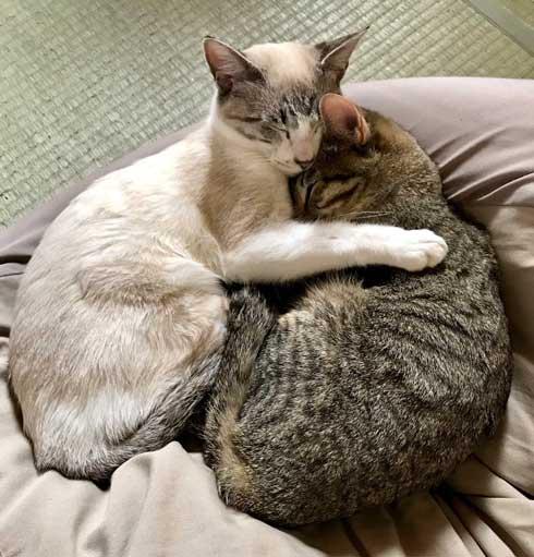 猫 朝起きたら いたずら 誇らしげ 毛糸 成長