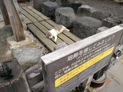 地熱を感じる猫さん
