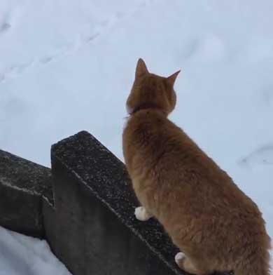 人間を足に使う 猫 雪 避ける お散歩 背中 乗る