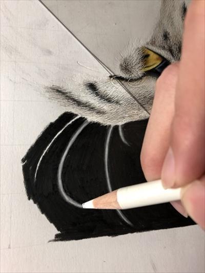 色鉛筆で描いた猫さん