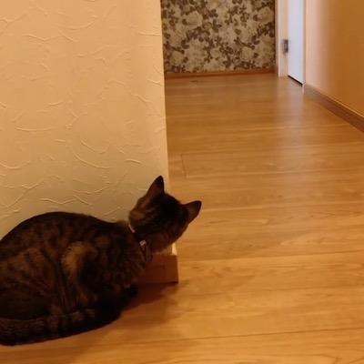 待ち伏せ猫さん