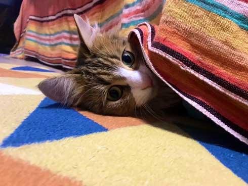 お風呂 かわいい 声 そぼろ 猫 苦手 出たい メインクーン ペルシャ