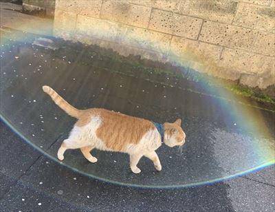 バリア展開する猫さん