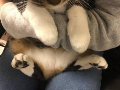 猫のおてて屋さん