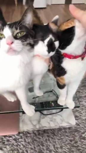 猫 ウェーブ撫で