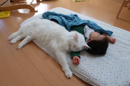 添い寝するトヨちゃん