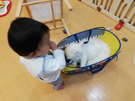 息子くんと遊ぶトヨちゃん