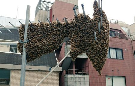 深大寺養蜂園