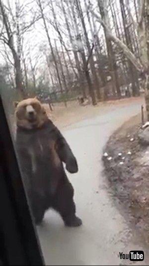 二足歩行のクマさん