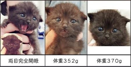 仔猫の成長早見表