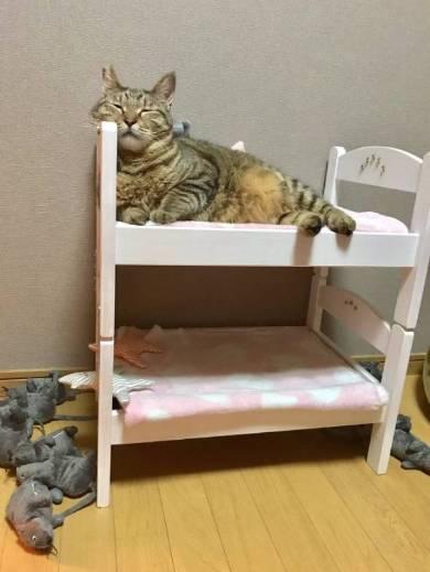 ドールベッド 猫ベッド
