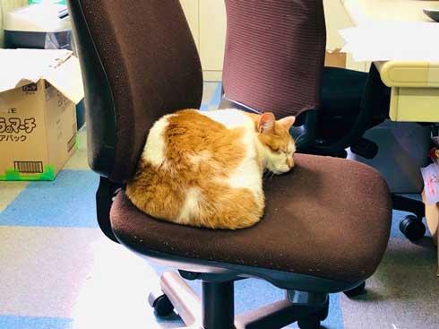 デスク 引き出し 奥 隠れる ネコ 猫 注意喚起 青木防災