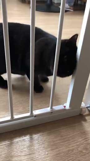 柵 腹でつっかえる 猫 抜けられない
