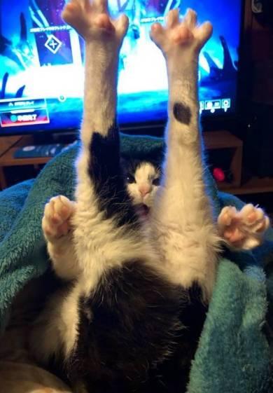 ごまさん ひざの上 ネコ
