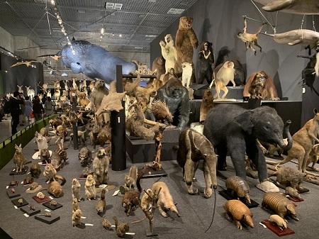 大哺乳類展2