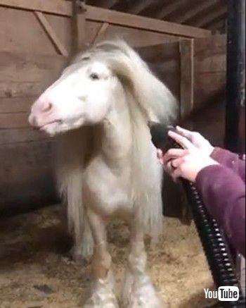 ロングヘアお馬さん