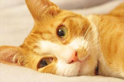 上智大学 猫の名前に関する調査