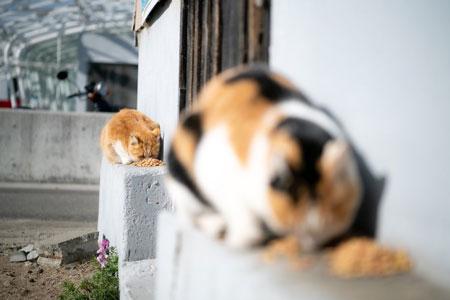直列に並ぶネコ