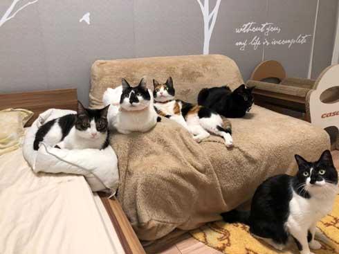 猫を飼うのをすすめない11の理由 響介 猫マスター 作曲家 エッセイ